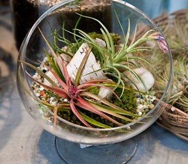Going topless: Indoor terrariums