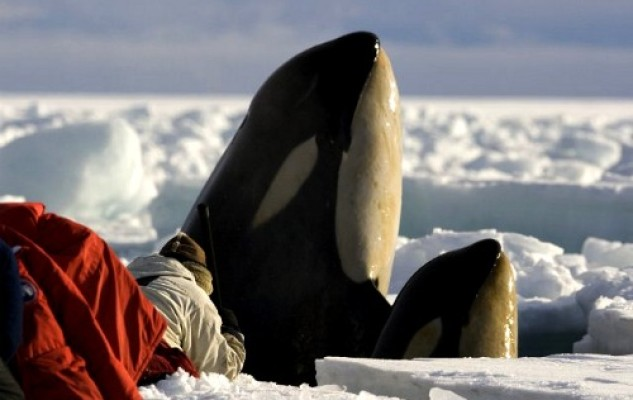 Frozen Planet – Not Your Father's Wild Kingdom