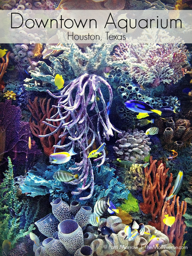 Downtown Aquarium - Houston, Texas | The Momiverse | Article by Patti Morrow