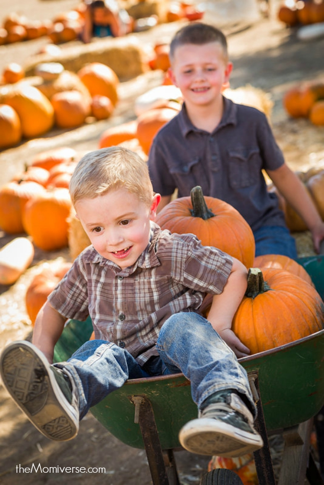Visit a pumpkin patch | The Momiverse